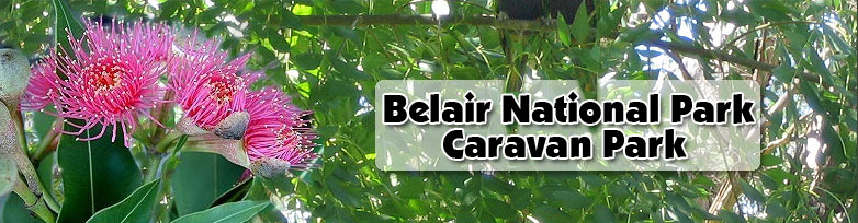 Belair National Park Holiday Park